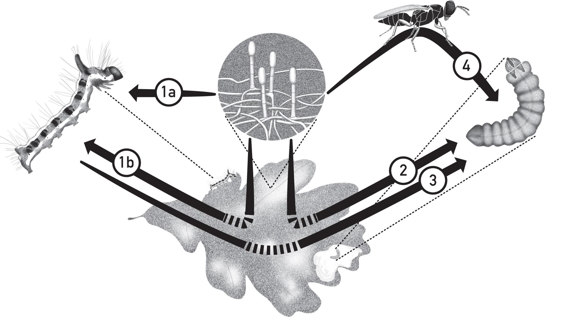 Species interactions on oak